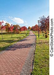 parque, callejón, en, otoño