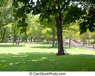 parque central, en, día soleado