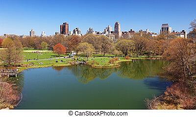 parque central, en, nueva york, -, tortuga, charca