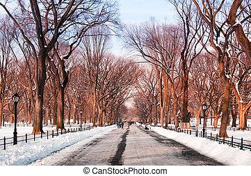 parque central, nueva york, invierno