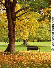 parque cidade, em, outono