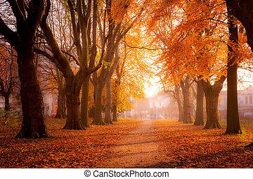 parque, colorido, árboles
