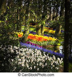 parque, con, springflowers