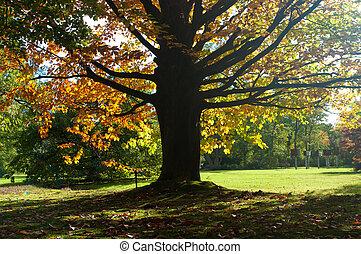 parque, em, outono, cores