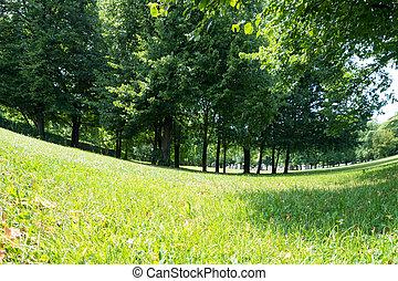 parque, em, verão