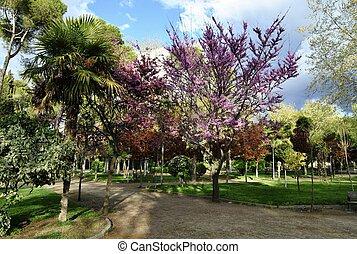 parque, en, primavera