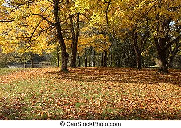 parque, estación, otoño, oregon., colores, cambiar