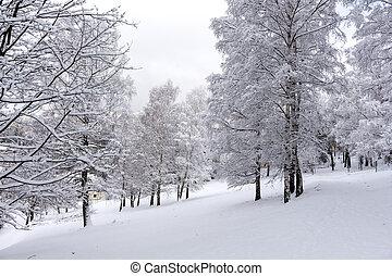 parque, inverno