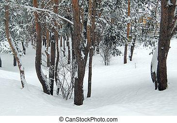 parque, Inverno, nevado
