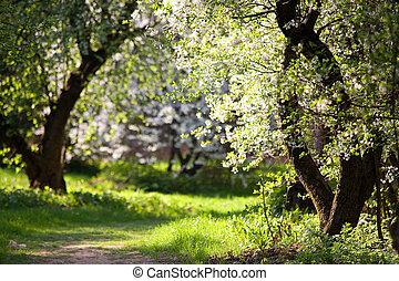 parque, manzana, árboles, florecer