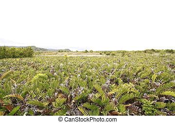 Parque nacional de chiloe