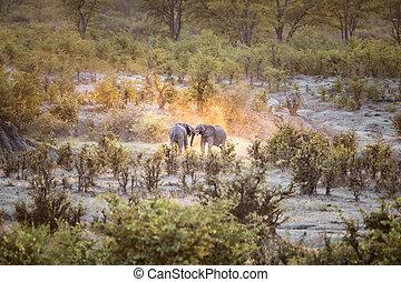 parque nacional hwange, elefante