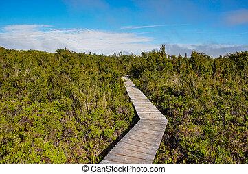 Parque Nacional of Chiloé, Chiloé Island, Chile.