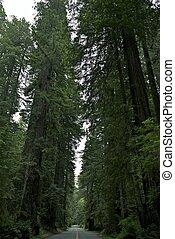 parque nacional, redwood