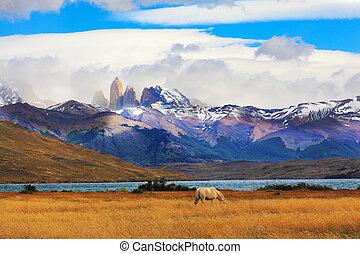 parque nacional, torres del paine, chile