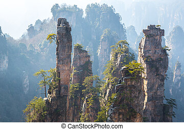 parque nacional, zhangjiajie, floresta