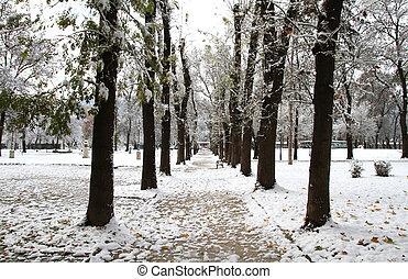 parque, neve
