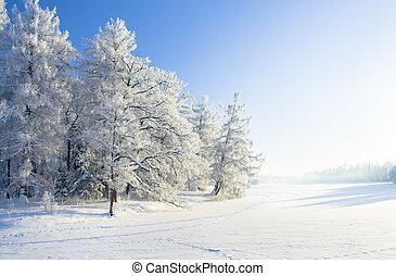 parque, nieve, invierno