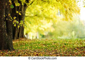 parque, otoño