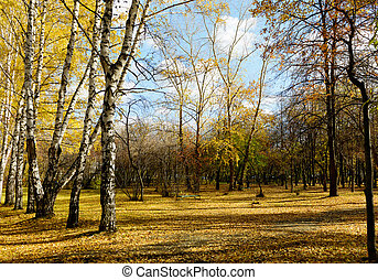 parque, outono