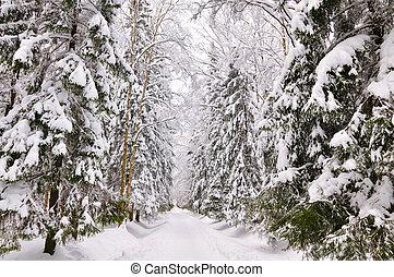parque, pavlovsk, saint-petersburg, invierno, rusia