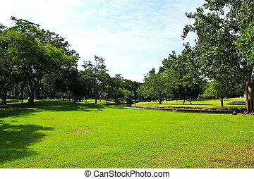 parque verde, árvores