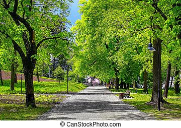 parque verde, callejón, en la ciudad
