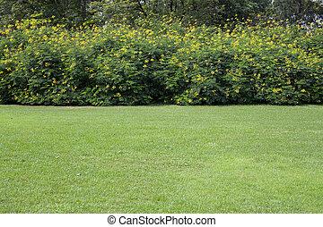 parque verde, em, a, verão