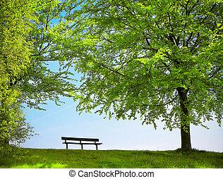 parque verde, en, primavera