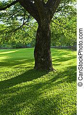 parque verde