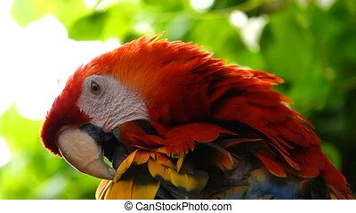 parrot., птица, животное