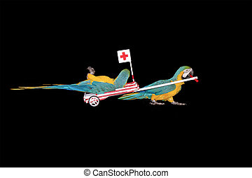 Parrot ambulance driving hospital