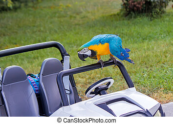 Parrot and baby the car on the lawn.