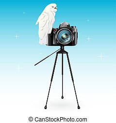 Parrot and camera
