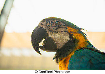 Parrot Ara Macaw blue and yellow portrait of a close-up