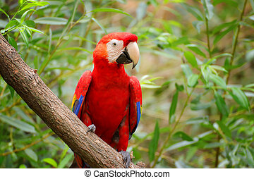 Parrot Ara, Macaw on the brunch
