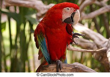 A closeup photo of parrot ara.