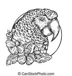 Parrot bird head animal engraving vector