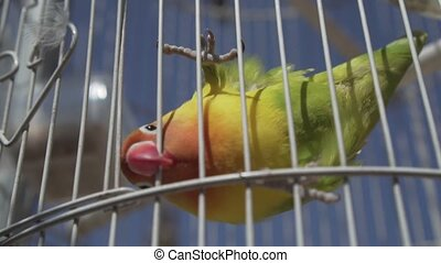 Parrot bird in cage over blue sky background - Video of...