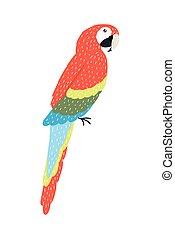 parrot bird specie