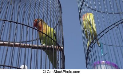 Parrot birds in cage over blue sky background