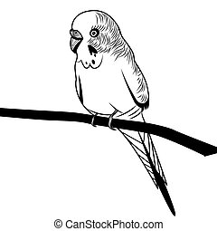 Parrot budgie bird head vector illustration for t-shirt. ...
