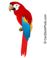 Parrot - Nature - bird