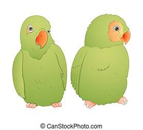 Parrot Couple - Cartoon Cute Green Parrot Birds Vector...