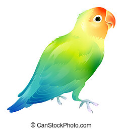 Parrot - drawing of beautiful parrot in a white background