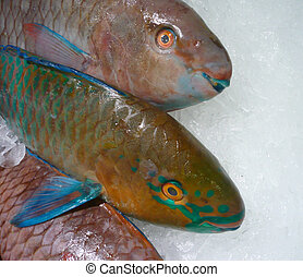 Parrot Fish - Parror fish on ice at the market