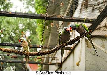 Parrot foraging on a branch