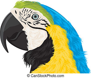 Parrot head. Vector illustration