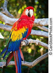 Parrot in captivity at a zoo