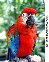 Parrot in close up